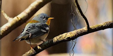 Birding Basics @ Hilltop Arboretum (spring 2021) tickets