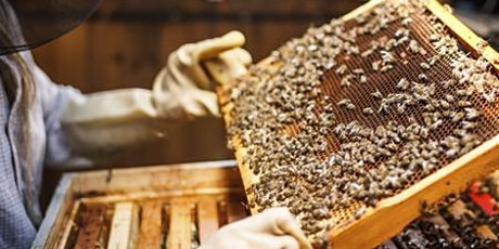 Gulf Coast Beekeepers of Florida - Monthly Meeting - Charlotte county  tickets
