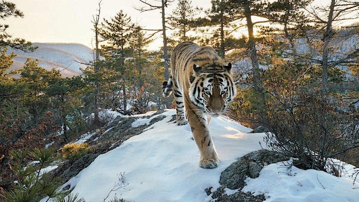 Afbeelding van WWF-nieuwjaarsevent