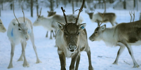 'Magic of Lapland' Nature Talk tickets