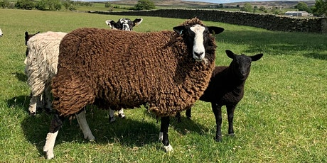 Keeping Sheep Healthy - covering the basics. tickets
