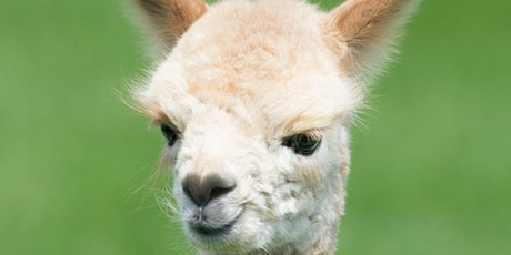 Essential health knowledge for camelid keepers tickets