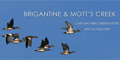 Brigantine and Mott's Creek January 2021 tickets