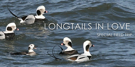 Longtails in Love tickets