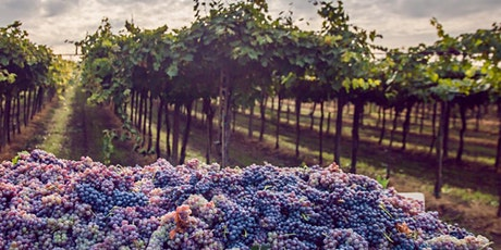 VIRTUAL HAPPY HOUR:  WINES OF EASTERN EUROPE tickets