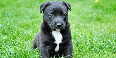 Puppy Basics  - Virtual Class tickets