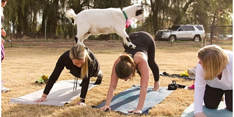 Goat Yoga fitness event In The Afterlife Music Hall At B House tickets