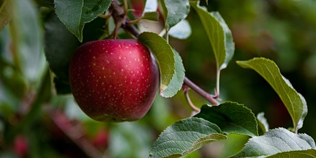 Small Fruit Pruning Workshops- Apple Pruning tickets