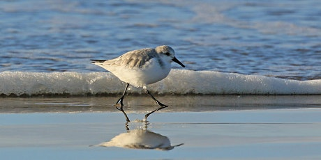 The Wildlife of Horsey Island with Martin Batt, Wildlife Photographer tickets