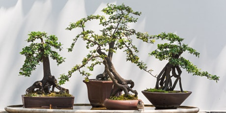 The Beauty of Bonsai Sequence: Demonstration - Virtual Workshop tickets