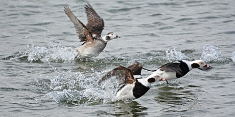 Winter Waterfowl  Other Possibilities tickets
