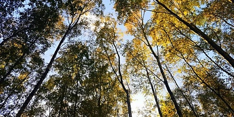 Forest Bathing+ Experience - Mindfulness in Nature 2hrs @ Harry Edwards tickets