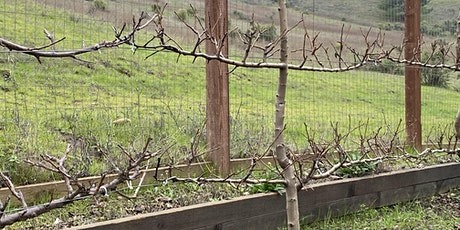 How to Prune Fruit Trees tickets