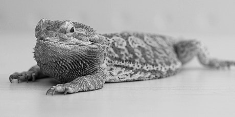Girl Scouts- Crime Scene Forensics: The Case of the Missing Bearded Dragon tickets