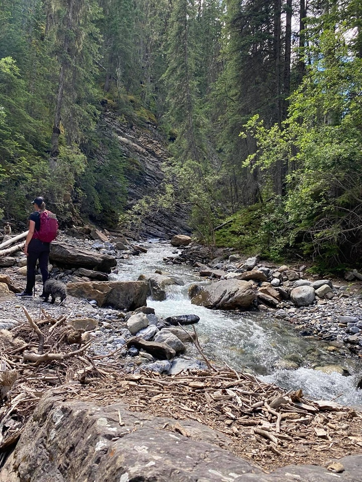 Beginner guided hike- Allstones creek (Nordegg area) image