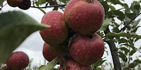 Organic Apple Tree Management tickets