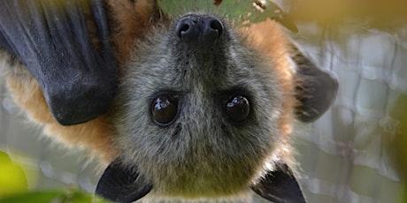 Penrith Bat Night tickets