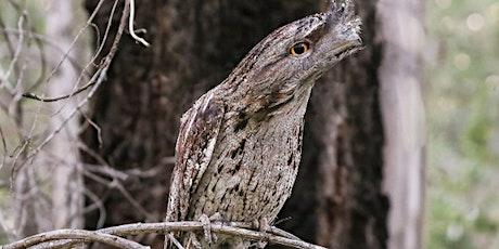 Wildlife at Twilight, Lt Cantello Reserve (Hammondville) tickets