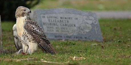 Elmwood Cemetery History and Birds Webinar! tickets