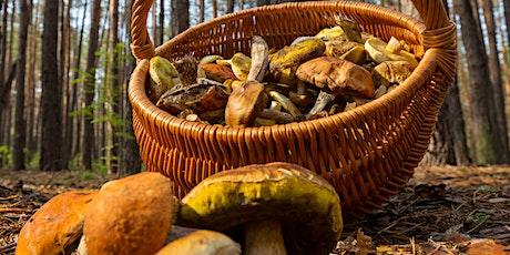 Mushroom Hunting tickets
