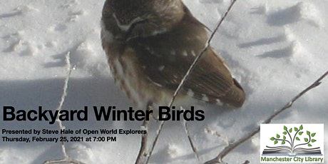 Backyard Winter Birds tickets