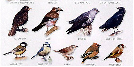 Bird Surveying Workshop (Paused due to COVID-19) tickets