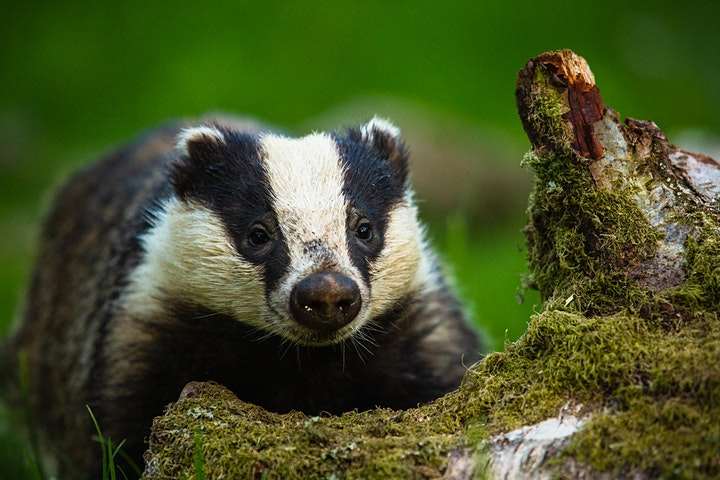 Haweswater Badger Hide | Gift Vouchers image