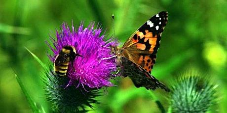 Water Saving Seminar - Pollinators & Native Plants tickets