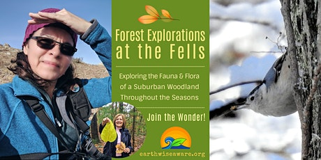 Winter Forest Explorations tickets
