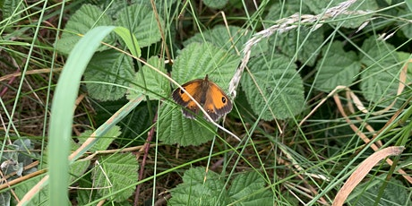 Butterfly Survey on Lytham Local Nature Reserve tickets