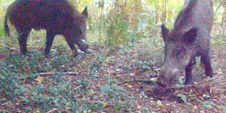 Getting Better Results From Camera Traps tickets