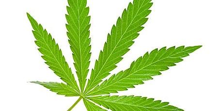 Medical Marijuana Doctor Certification- Medical Marijuana Card tickets