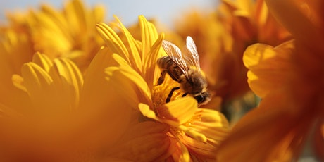 Why Do Flowers and Bees Love Each Other So Much? tickets