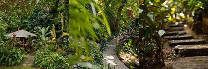 Forest Bathing in an Artist's Garden image