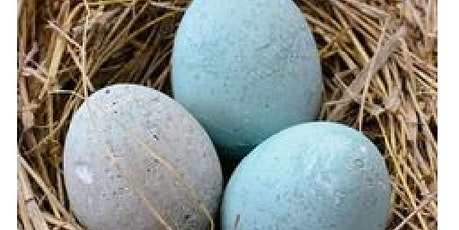 Cement Eggs $35 tickets