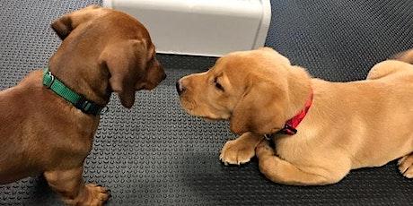 Woofgang Puppy Socials tickets