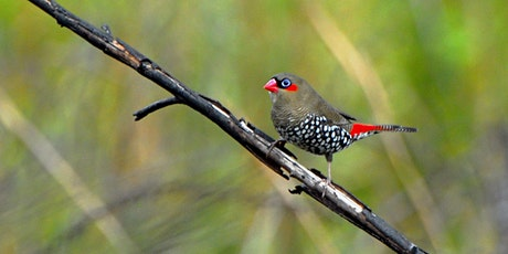 Birdwatching at Korung National Park, Carmel, Western Australia tickets