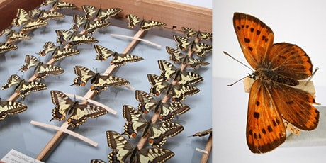 The History of Wildlife: Engaging Audiences with Museum Collections tickets