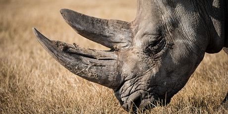 Global Policies for Species Conservation to Prevent Future Extinctions tickets