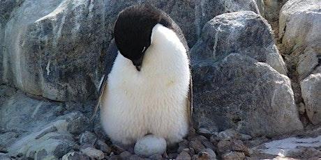 À la découverte de l'Antarctique - VIRTUEL billets