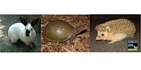 Cosley Zoo-m Animal Chat - Meet an armadillo tickets