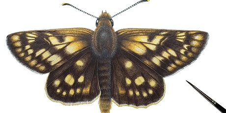Illustrating the Chequered Skipper with Virtual Workshop Lizzie Harper tickets