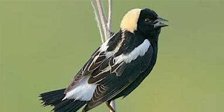 Webinar - Fermilab Natural Areas' Grassland Bird Project tickets