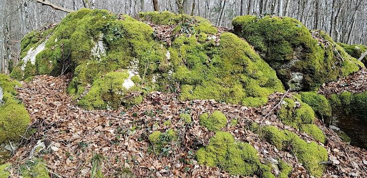 Image pour Les Bois Sacrés - Balade accompagnée à thème