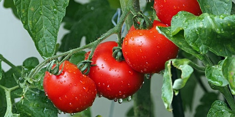 Growing Great Tomatoes: Top Tips for Piedmont Gardeners - Part 2 tickets