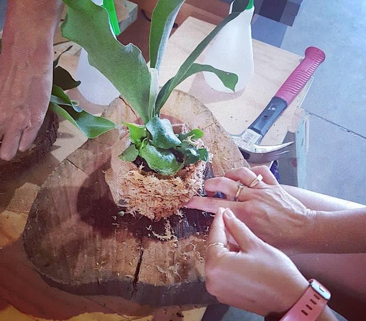 Orchid & Elkhorn Mounting Workshop image