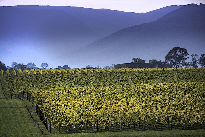 Yarra Valley Photographic Tour image