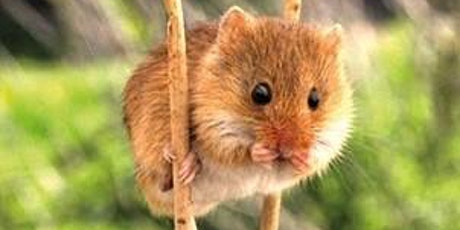 Acoustic ID - Small Terrestrial Mammals tickets