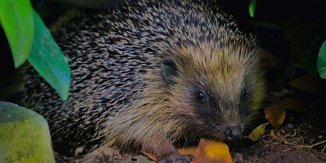 A Talk on Hedgehogs tickets