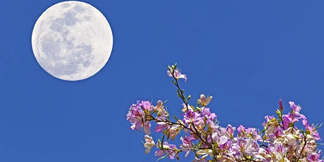 Flower Full Moon Night Kayak and Paddle tickets